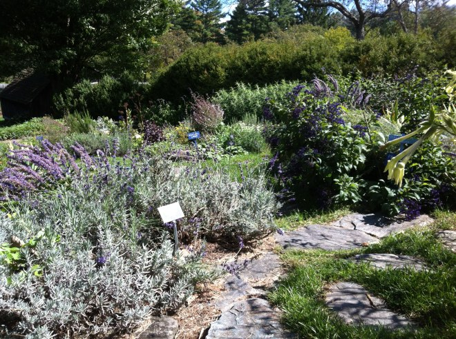 a sunny herb bed at Berkshire Botanical Gardens