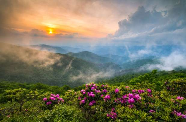 Plan Ahead for the Asheville Annual Meeting and Spring HerbFestival