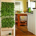 Vertical herb wall