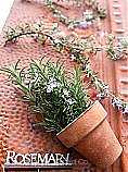 Sustainable seed rosemary