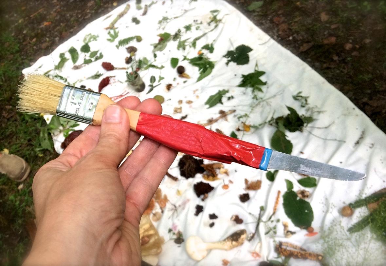 Foraging brife