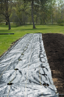 soil.Bed.-¬KellyOrzelPhotography