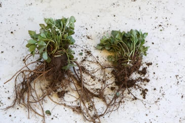 root division two plants