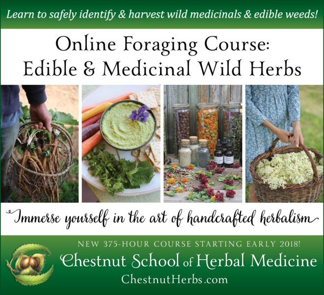Online-Foraging-Course-Edible-and-Medicinal-Wild-Herbs-1