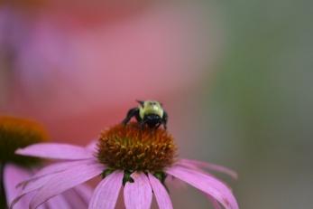 pollinator 2