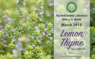 Lemon thyme, HOM