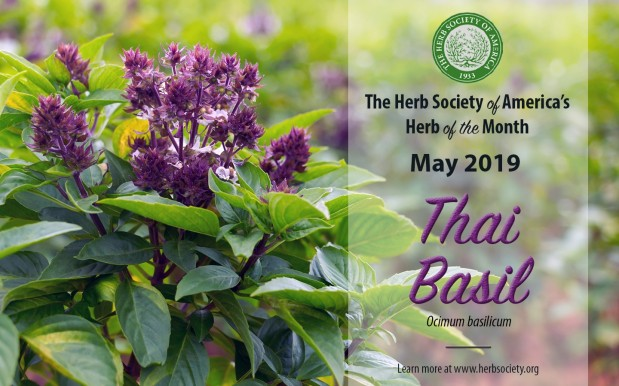 Thai Basil – Herb of the Month for May