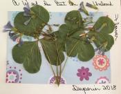 Dianne herbs on card 1
