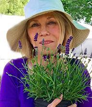 lavender nancy