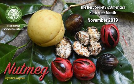 November2019 HOM Nutmeg