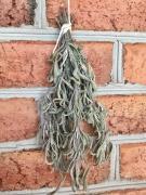 sage drying