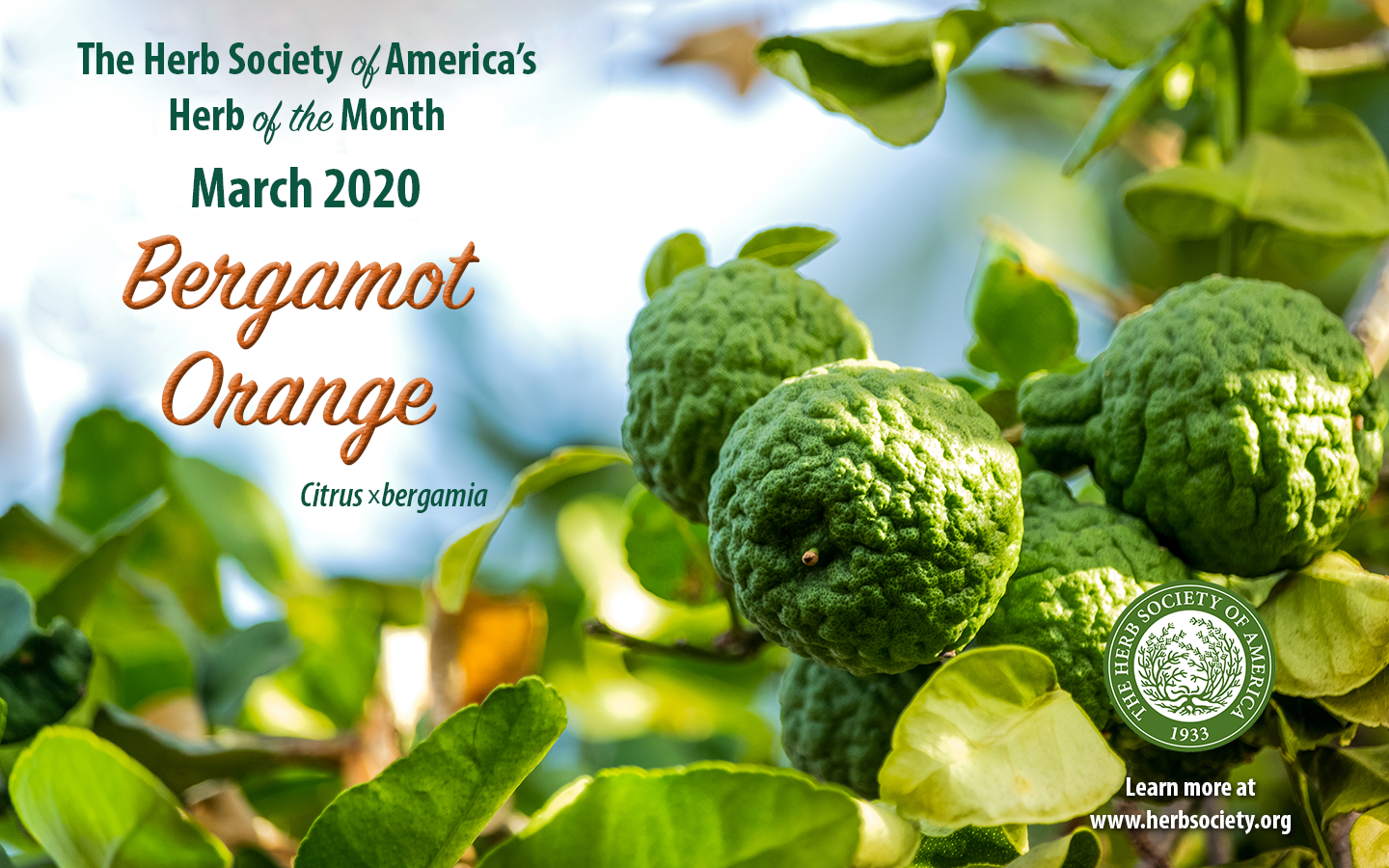 March2020 HOM Bergamot Orange