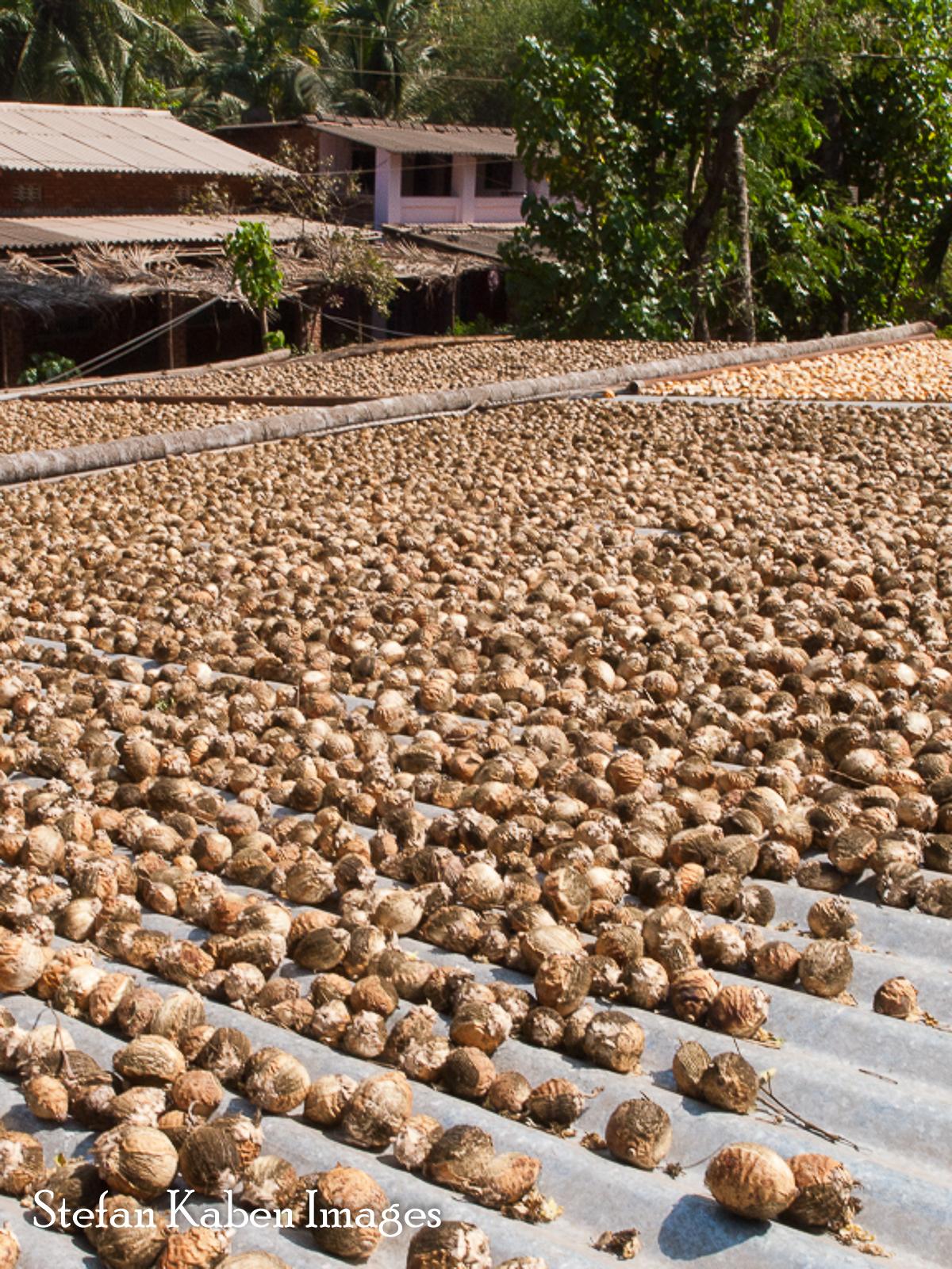 03 Betel Nuts 523 VF
