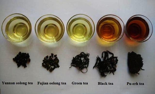 Tea The-shapes-and-tea-soup-color-of-different-types-of-tea