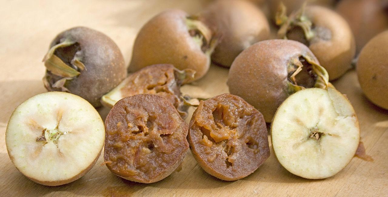 Unripe and bletted (or ripe) medlar fruit